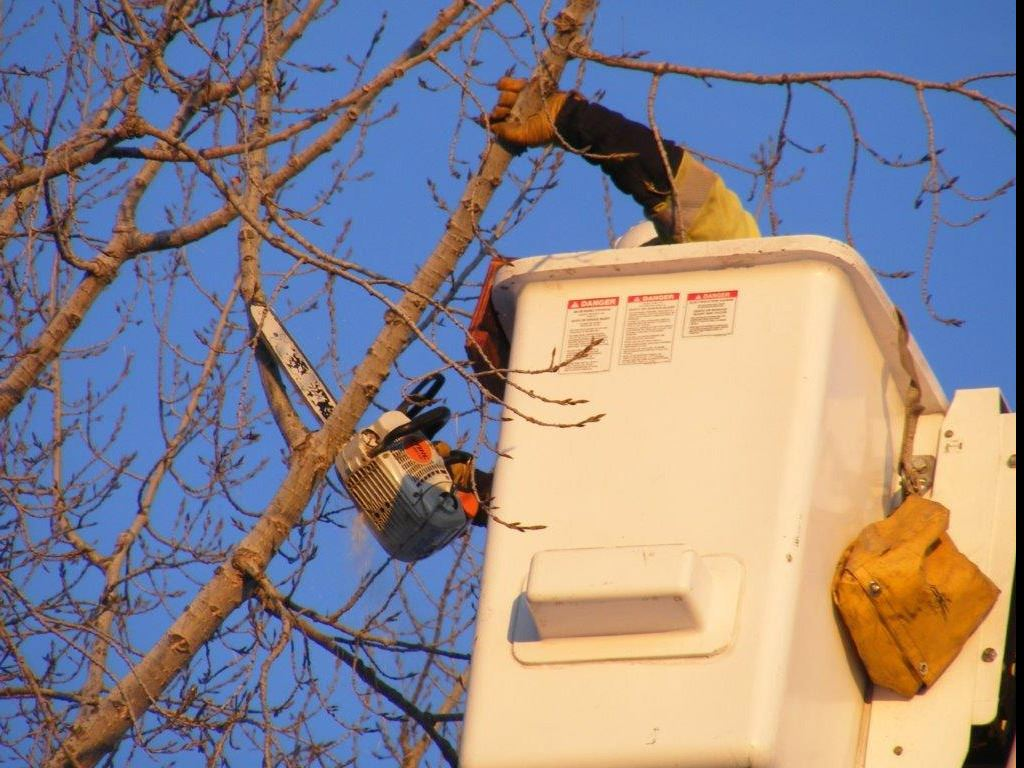 Electric Distribution crews conduct tree trimming to prevent tree growth into overhead power lines
